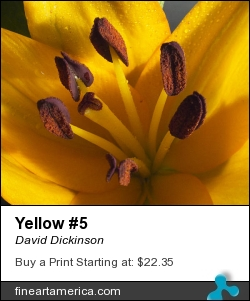 Yellow #5 by David Dickinson - Photograph - Digital Photography
