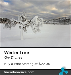 Winter Tree by Gry Thunes - Photograph