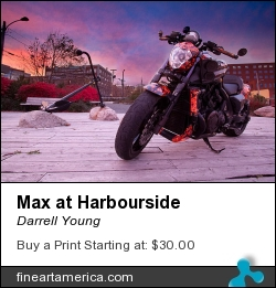 Max At Harbourside by Darrell Young - Photograph - Digital Photography Print