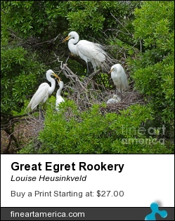 Great Egret Rookery by Louise Heusinkveld - Photograph - Photograph