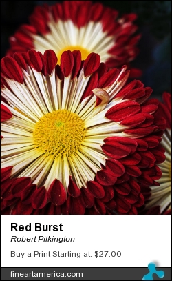 Red Burst by Robert Pilkington - Photograph - Photography