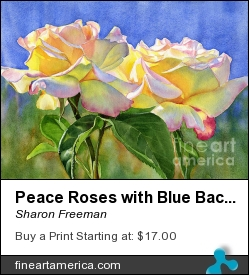 Peace Roses With Blue Background by Sharon Freeman - Painting - Watercolor On Paper
