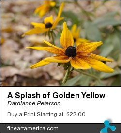 A Splash Of Golden Yellow by Darolanne Peterson - Photograph - Photography