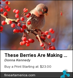 These Berries Are Making Me Dizzy by Donna Kennedy - Photograph - Photograph