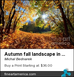 Autumn Fall Landscape In Forest by Michal Bednarek - Photograph