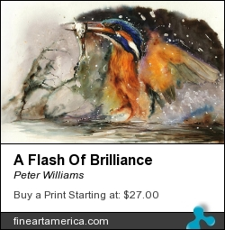 A Flash Of Brilliance by Peter Williams - Painting - Watercolour