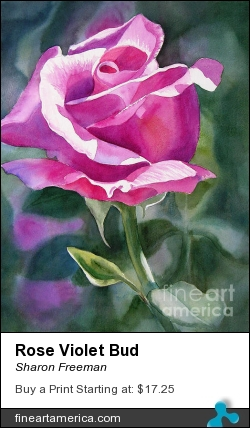 Rose Violet Bud by Sharon Freeman - Painting - Watercolor On Paper