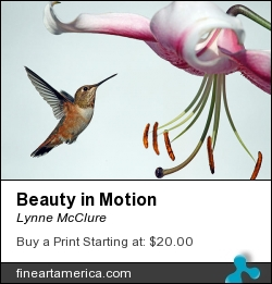 Beauty In Motion by Lynne McClure - Photograph - Photography