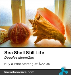 Sea Shell Still Life by Douglas MooreZart - Painting - Painting And Digital