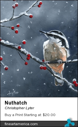 Nuthatch by Christopher Lyter - Painting - Oil On Canvas