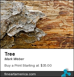 Tree by Mark Weber - Photograph - Photographs