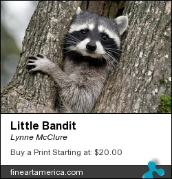 Little Bandit by Lynne McClure - Photograph - Photography
