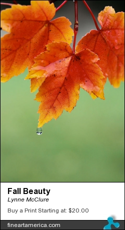 Fall Beauty by Lynne McClure - Photograph - Photography