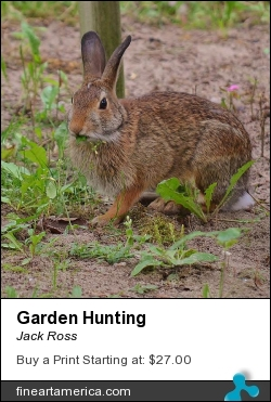 Garden Hunting by Jack Ross - Photograph
