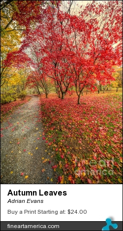 Autumn Leaves by Adrian Evans - Photograph
