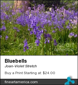 Bluebells by Joan-Violet Stretch - Photograph - Photography