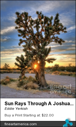 Sun Rays Through A Joshua Tree by Eddie Yerkish - Photograph - Hdr Photograph