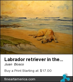 Labrador Retriever In The Beach by Juan  Bosco - Painting - Watercolor On Paper