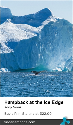 Humpback At The Ice Edge by Tony Skerl - Photograph - Photography