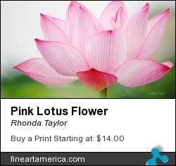 Pink Lotus Flower by Rhonda Taylor - Photograph - Digital Photography