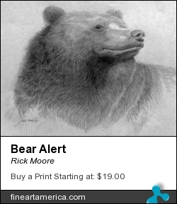 Bear Alert by Rick Moore - Drawing - Graphite On Paper