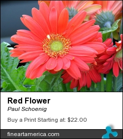 Red Flower by Paul Schoenig - Photograph - Photography