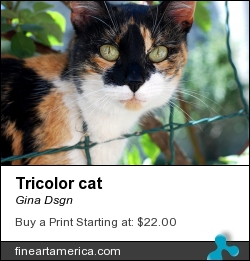 Tricolor Cat by Gina Dsgn - Photograph - Photography