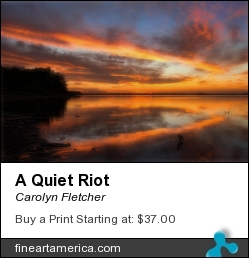 A Quiet Riot by Carolyn Fletcher - Photograph - Photography