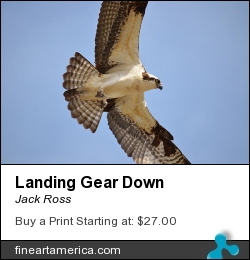 Landing Gear Down by Jack Ross - Photograph