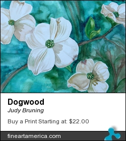 Dogwood by Judy Bruning - Painting - Watercolor