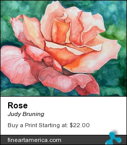 Rose by Judy Bruning - Painting - Watercolor