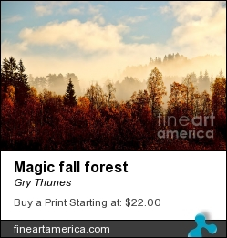 Magic Fall Forest by Gry Thunes - Photograph