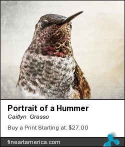Portrait Of A Hummer by Caitlyn  Grasso - Photograph - Photograph