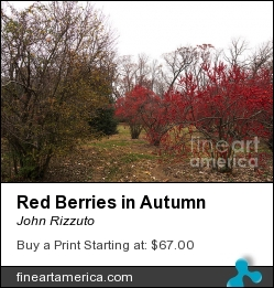 Red Berries In Autumn by John Rizzuto - Photograph - Photography