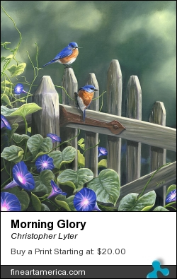 Morning Glory by Christopher Lyter - Painting - Oil On Linen