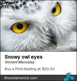 Snowy Owl Eyes by Vincent Monozlay - Painting