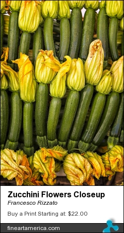Zucchini Flowers Closeup by Francesco Rizzato - Photograph - Photographs
