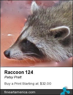 Raccoon 124 by Patsy Pratt - Photograph - Digital Photography