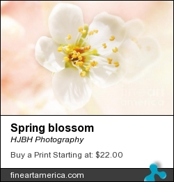 Spring Blossom by HJBH Photography - Photograph - Photographs - Photography, Photographs