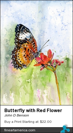 Butterfly With Red Flower by John D Benson - Painting - Watercolor