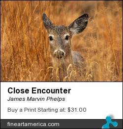 Close Encounter by James Marvin Phelps - Photograph - Digital Photography