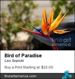 Bird Of Paradise by Leo Sopicki - Photograph - Photography