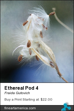 Ethereal Pod 4 by Fraida Gutovich - Photograph - Photography W/texture