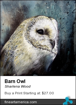 Barn Owl by Sharlena Wood - Drawing - Charcoal On Panel