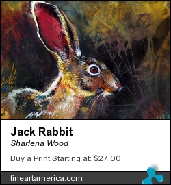 Jack Rabbit by Sharlena Wood - Drawing - Charcoal On Paper