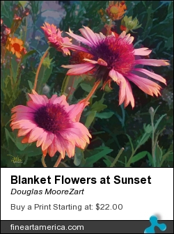 Blanket Flowers At Sunset by Douglas MooreZart - Painting - Painting And Digital
