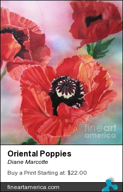 Oriental Poppies by Diane Marcotte - Painting - Watercolour