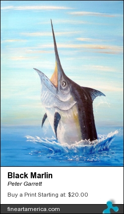 Black Marlin by Peter Garrett - Painting - Oil On Canvas