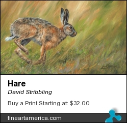 Hare by David Stribbling - Painting - Oil On Canvas