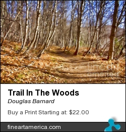 Trail In The Woods by Douglas Barnard - Photograph - Digitally Enhanced Photographs